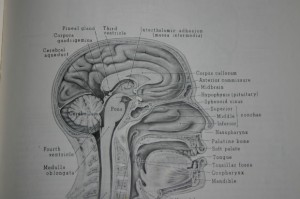 NLP心理学デザイン